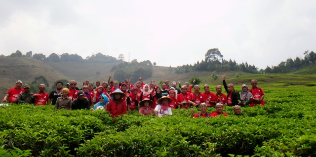 RRPG Participants on field visit to tea plantation in Puncak, highland area near to Bogor, Indonesia. 28 August 2015